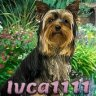 Ivca1111