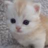 Kleines-Kätzchen