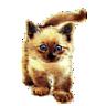 Katzenmutter851