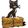 cat18874
