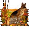 Wachhund007