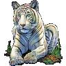 Tiger19581