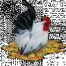 Boerin-stammie
